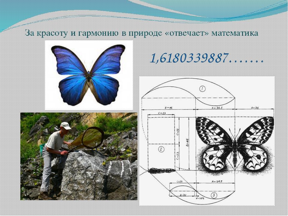 За красоту и гармонию в природе «отвечает» математика 1,6180339887…….