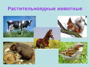 Растительноядные животные