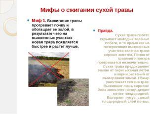 Мифы о сжигании сухой травы Миф 1. Выжигание травы прогревает почву и обогаща