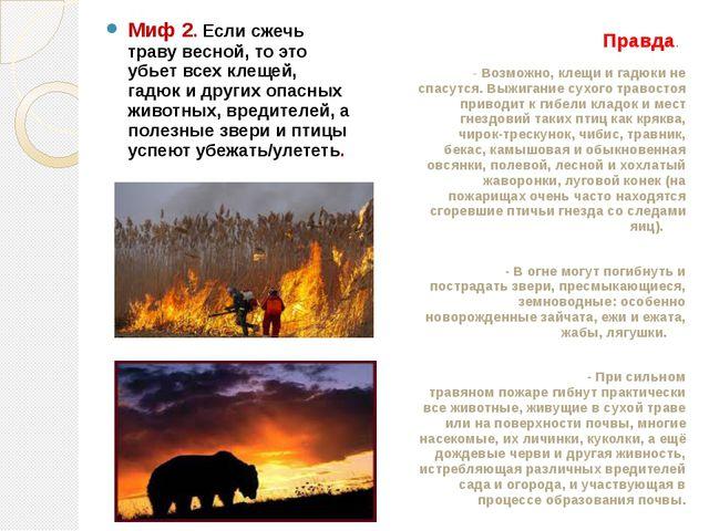 Миф 2. Если сжечь траву весной, то это убьет всех клещей, гадюк и других опа...