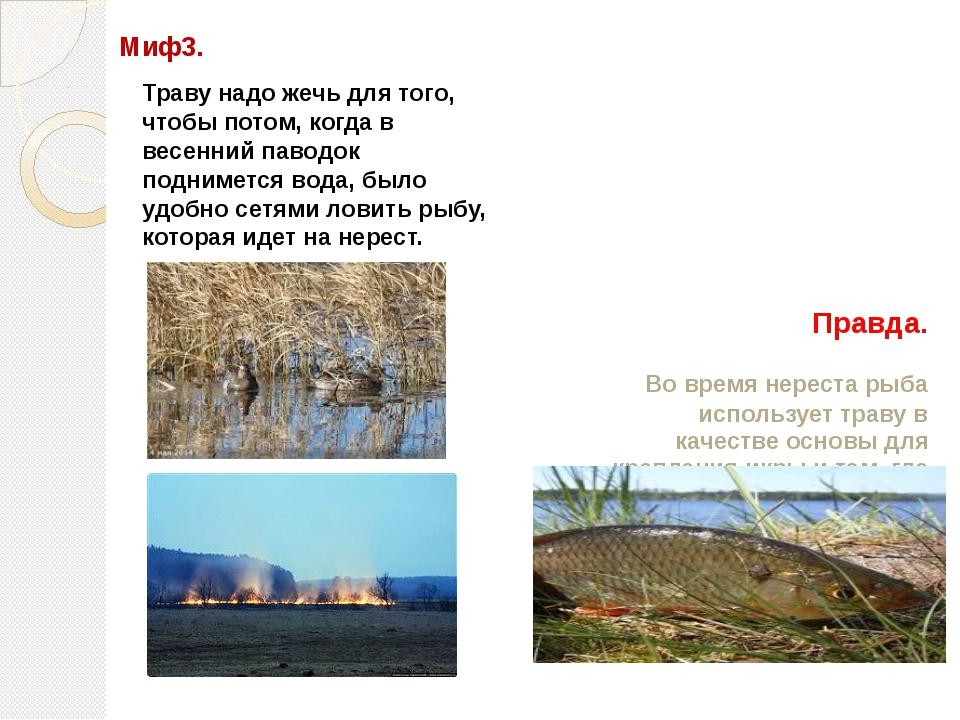 Правда. Во время нереста рыба использует траву в качестве основы для креплени...