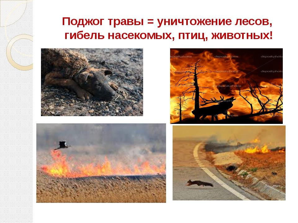 Поджог травы = уничтожение лесов, гибель насекомых, птиц, животных!