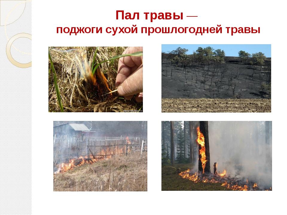 Пал травы— поджогисухой прошлогодней травы