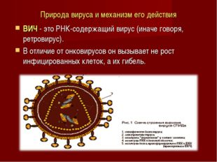 Природа вируса и механизм его действия ВИЧ - это РНК-содержащий вирус (иначе