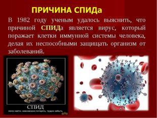 В 1982 году ученым удалось выяснить, что причиной СПИДа является вирус, котор