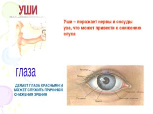 Уши – поражает нервы и сосуды уха, что может привести к снижению слуха ДЕЛАЕТ