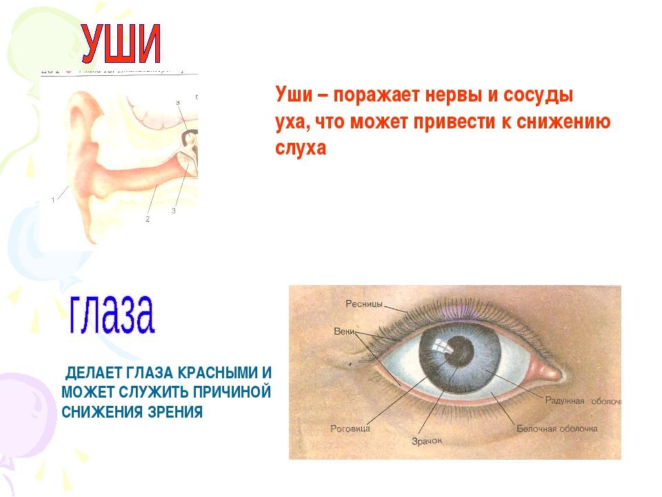 Уши – поражает нервы и сосуды уха, что может привести к снижению слуха ДЕЛАЕТ...