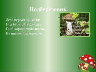 Подберезовик Лета первая примета: Под березой в холодке Гриб коричневого цвет
