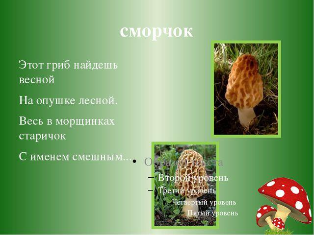 сморчок Этот гриб найдешь весной На опушке лесной. Весь в морщинках старичок...