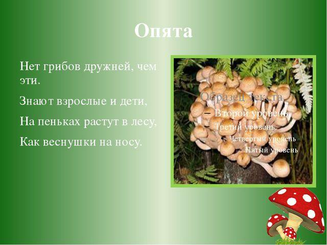 Опята Нет грибов дружней, чем эти. Знают взрослые и дети, На пеньках растут в...