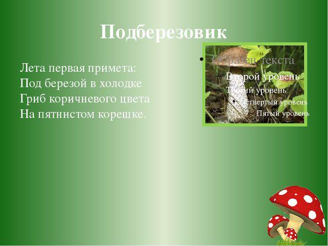 Подберезовик Лета первая примета: Под березой в холодке Гриб коричневого цвет...