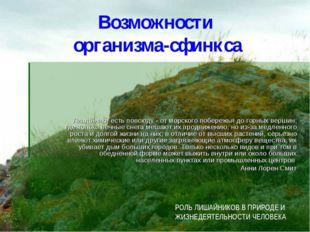 Возможности организма-сфинкса Лишайники есть повсюду - от морского побережья