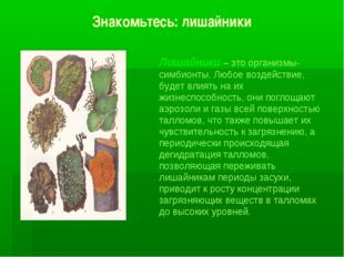 Знакомьтесь: лишайники Лишайники – это организмы-симбионты. Любое воздействие