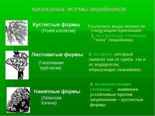 ЖИЗНЕННЫЕ ФОРМЫ ЛИШАЙНИКОВ Различить виды можно по следующим признакам: 1. по