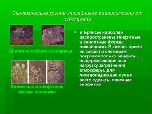 Экологические группы лишайников в зависимости от субстрата В Брянске наиболее