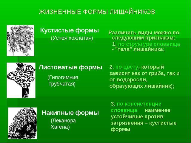 ЖИЗНЕННЫЕ ФОРМЫ ЛИШАЙНИКОВ Различить виды можно по следующим признакам: 1. по...