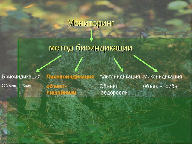 Мониторинг метод биоиндикации Бриоиндикация Объект - мхи Лихеноиндикация объ...