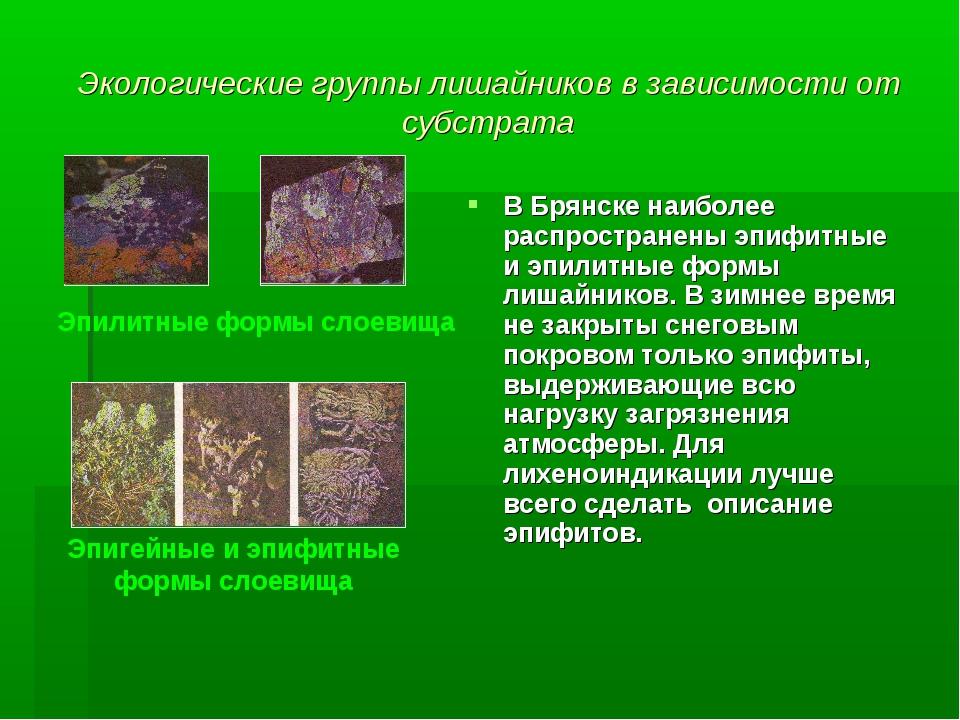 Экологические группы лишайников в зависимости от субстрата В Брянске наиболее...