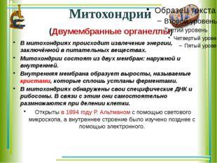 Митохондрии (Двумембранные органеллы) В митохондриях происходит извлечение эн