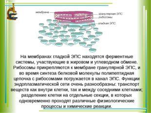 На мембранах гладкой ЭПС находятся ферментные системы, участвующие в жировом
