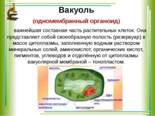 Вакуоль (одномембранный органоид) важнейшая составная часть растительных кле