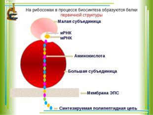 Малая субъединица Большая субъединица иРНК мРНК Мембрана ЭПС Синтезируемая п