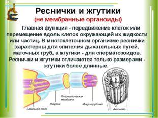 Реснички и жгутики (не мембранные органоиды) Главная функция - передвижение