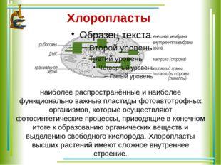 Хлоропласты наиболее распространённые и наиболее функционально важные пласти