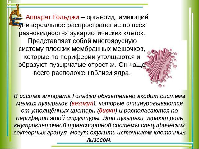 Аппарат Гольджи – органоид, имеющий универсальное распространение во всех ра...