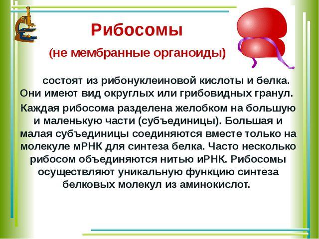 Рибосомы (не мембранные органоиды) состоят из рибонуклеиновой кислоты и белк...