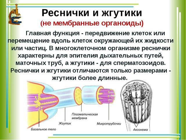 Реснички и жгутики (не мембранные органоиды) Главная функция - передвижение...
