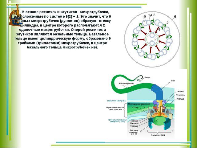 В основе ресничек и жгутиков - микротрубочки, расположенные по системе 9(2)...