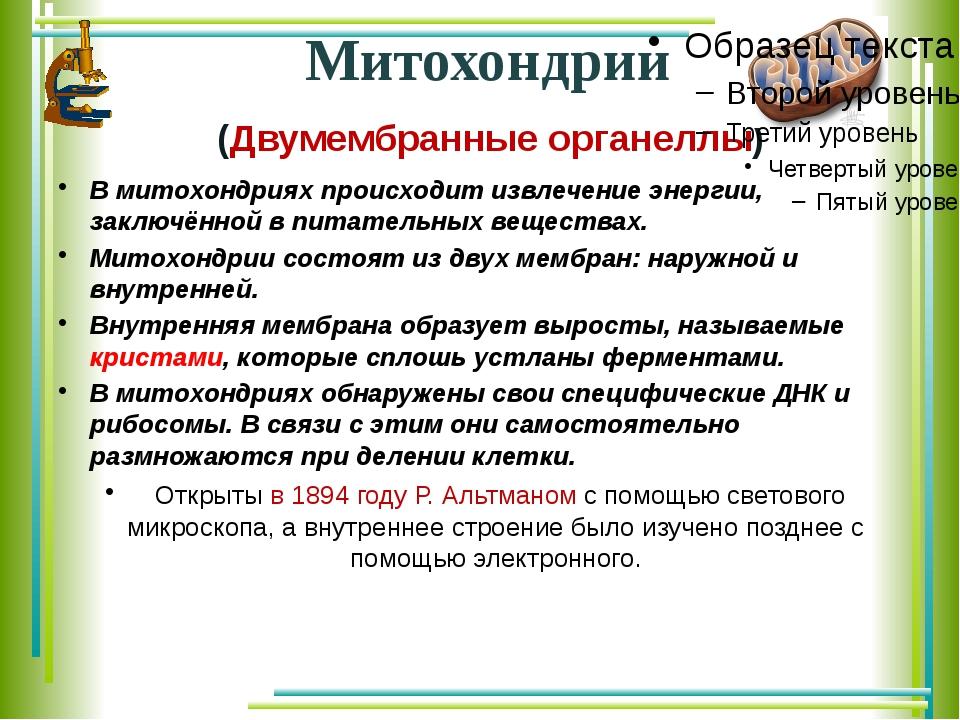 Митохондрии (Двумембранные органеллы) В митохондриях происходит извлечение эн...
