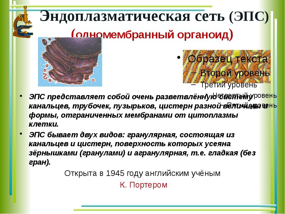 Эндоплазматическая сеть (ЭПС) (одномембранный органоид) ЭПС представляет собо...