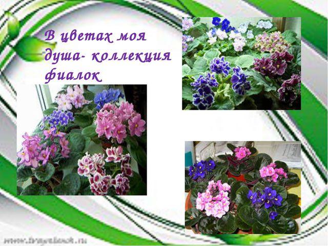 В цветах моя душа- коллекция фиалок