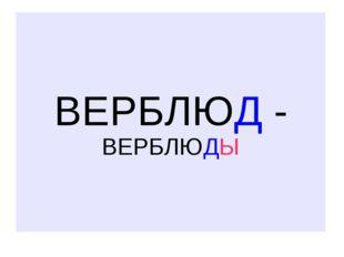 ВЕРБЛЮД - ВЕРБЛЮДЫ