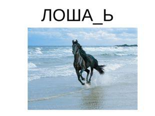 ЛОША_Ь