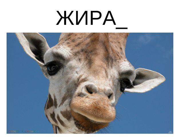 ЖИРА_