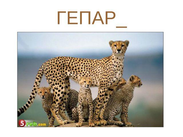 ГЕПАР_