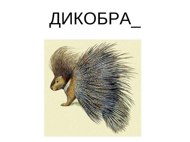 ДИКОБРА_