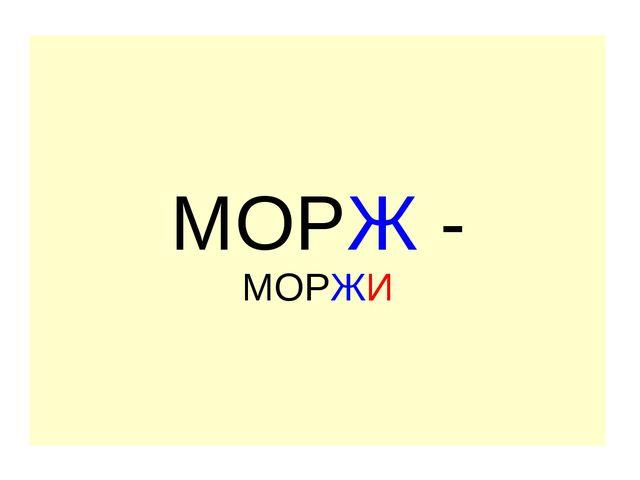 МОРЖ - МОРЖИ