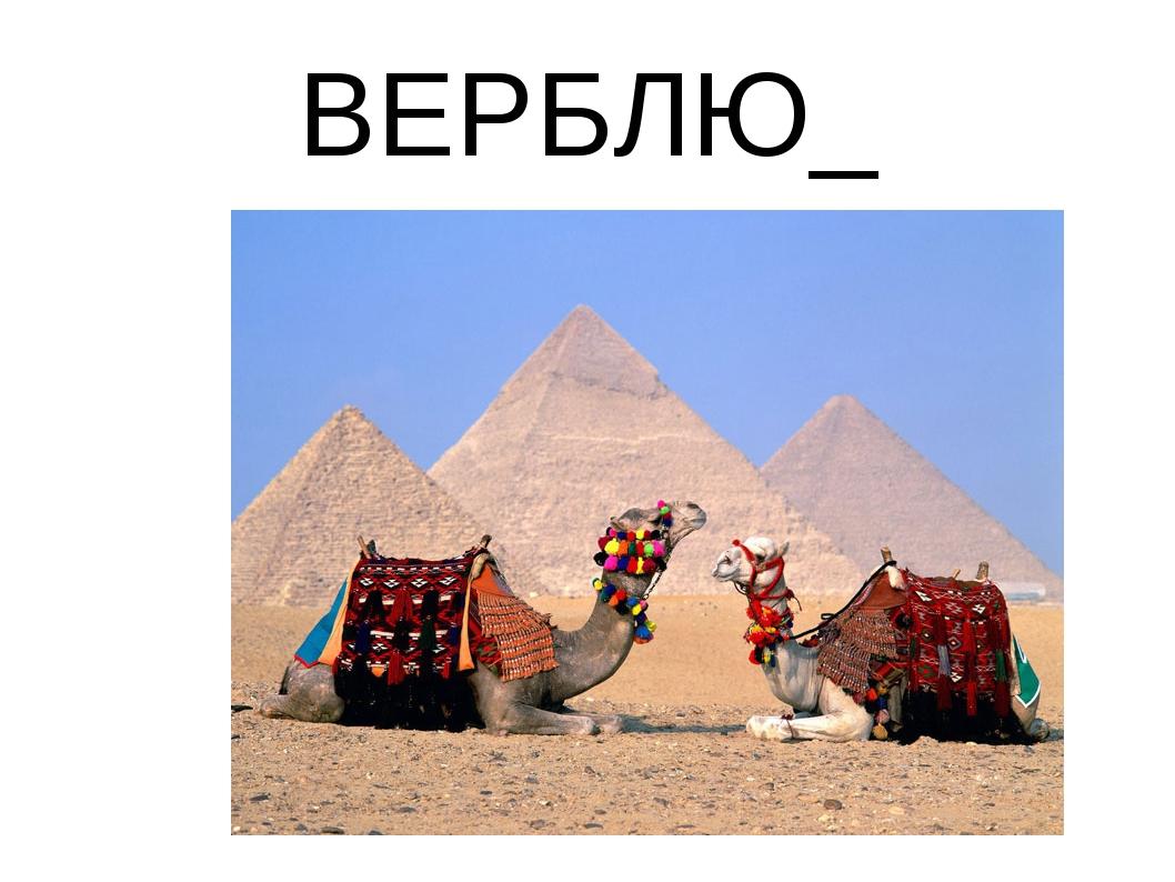 ВЕРБЛЮ_