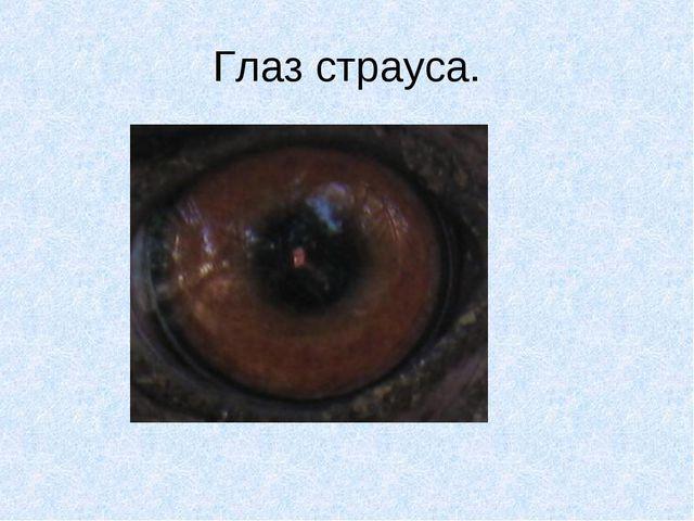 Глаз страуса.