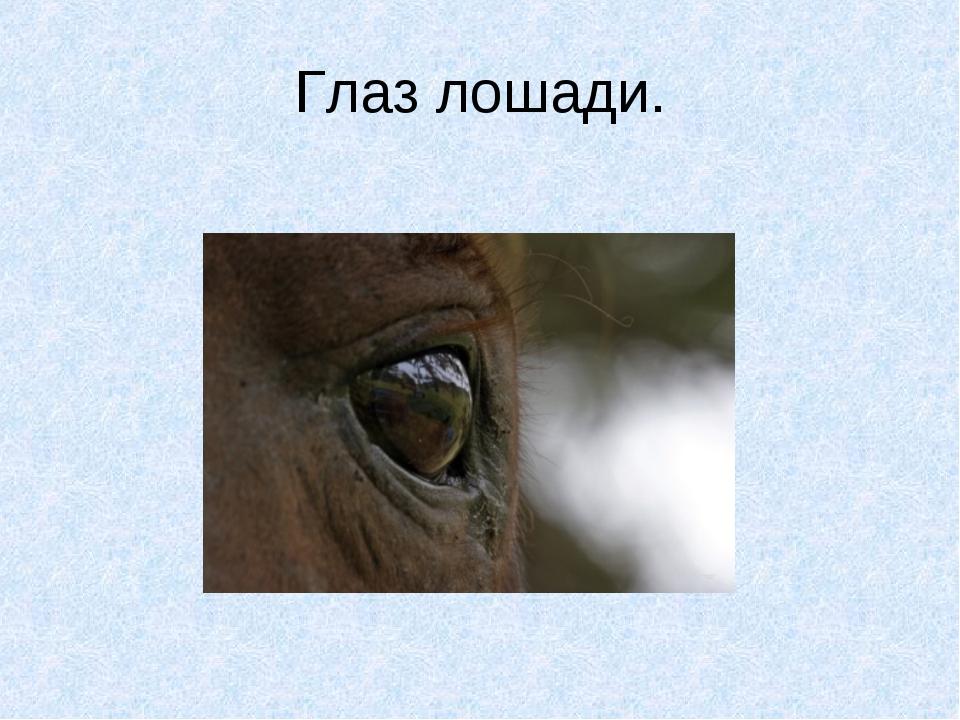 Глаз лошади.