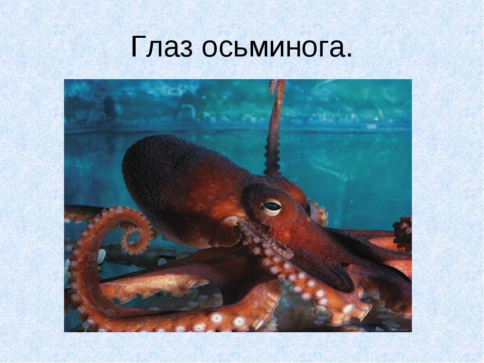 Глаз осьминога.