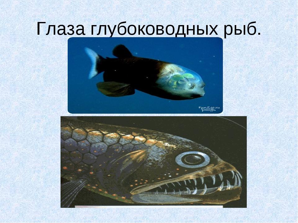 Глаза глубоководных рыб.