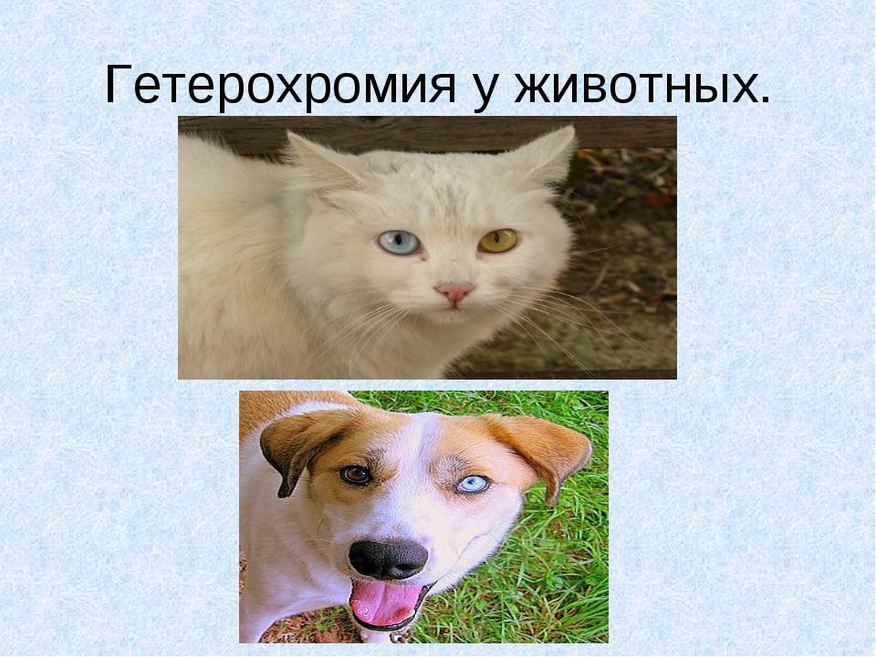 Гетерохромия у животных.