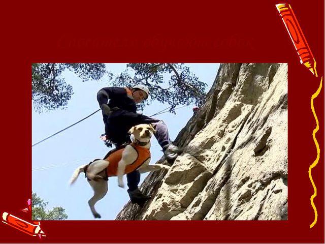 Спасатели обучают собак