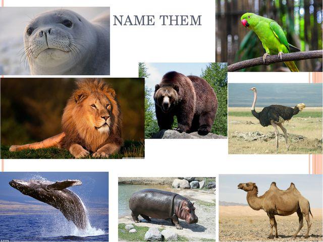 NAME THEM
