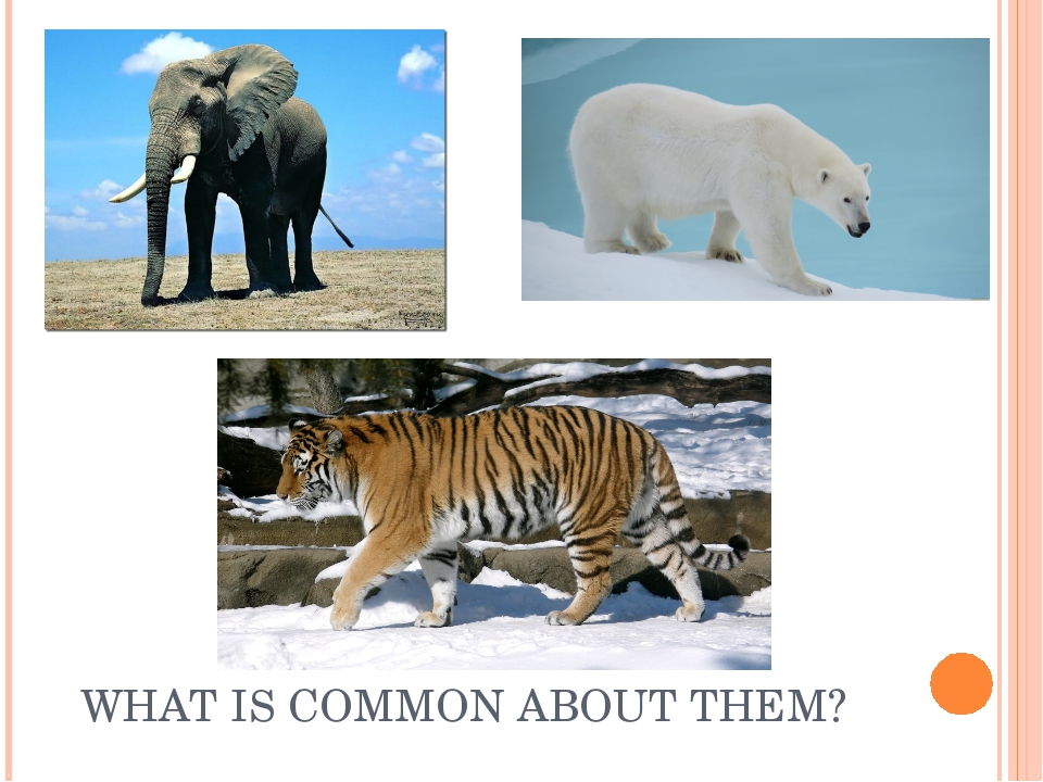 WHAT IS COMMON ABOUT THEM?